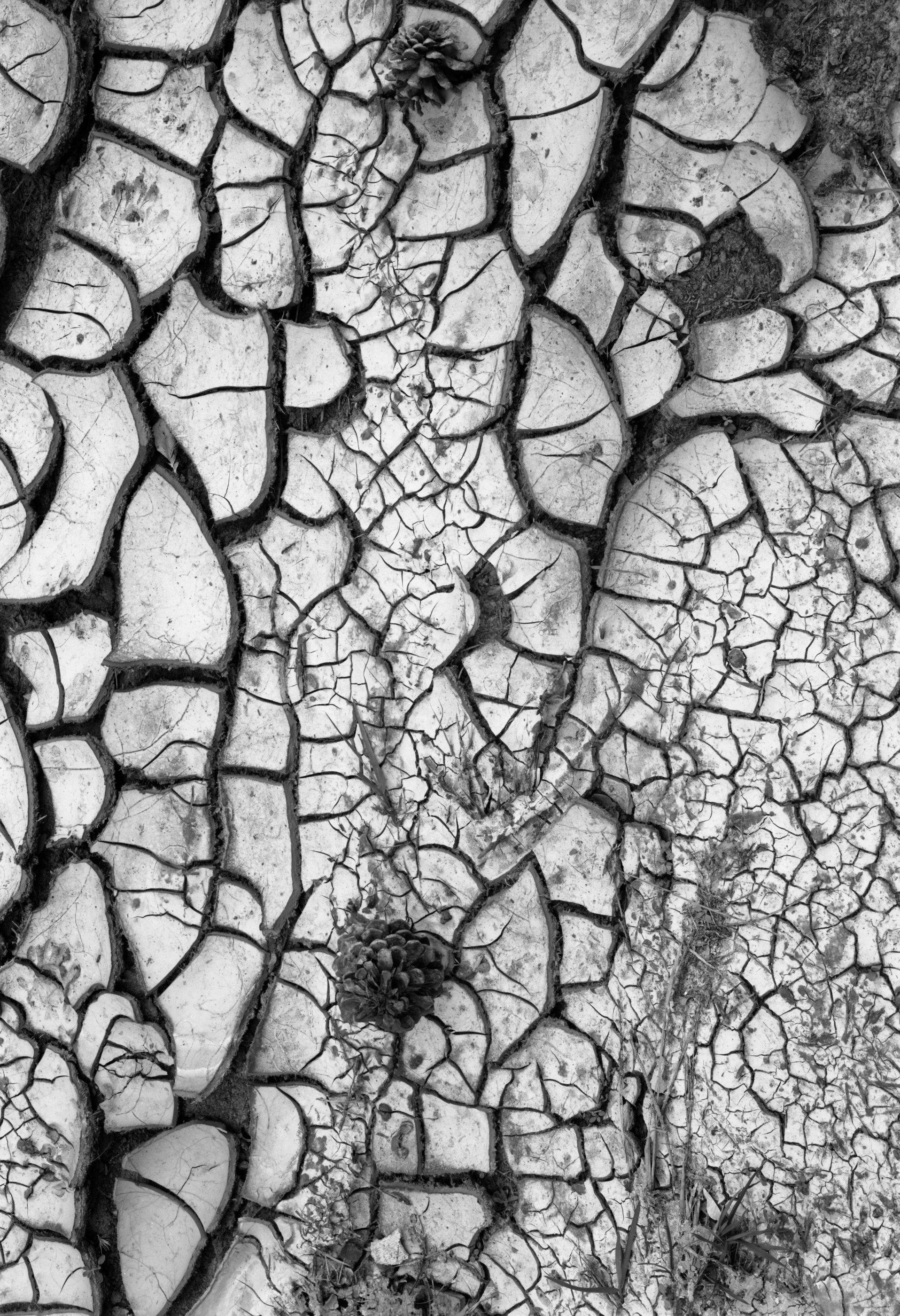 185_Dry_Mud.jpg