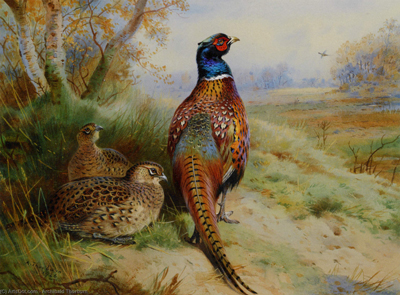 Cock and Hen Pheasant at the Edge of a Wood, by Archibald Thorburn, 1926