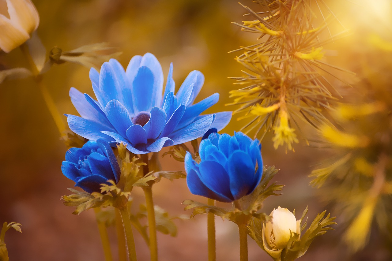 anemone-2396299_1280.jpg