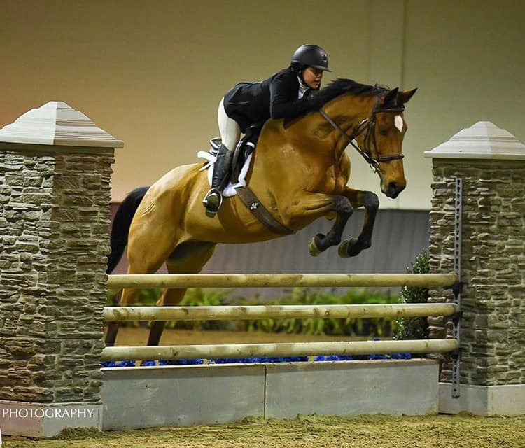 HEMINGWAY - Hemingway available for half lease at TBS or full lease. Honest , brave, sweet personality. Good for someone who wants to do 2' up to the 3' eq/hunter/jumpers. Contact Kim Mulligan (kjmulligan@aol.com) for more information.