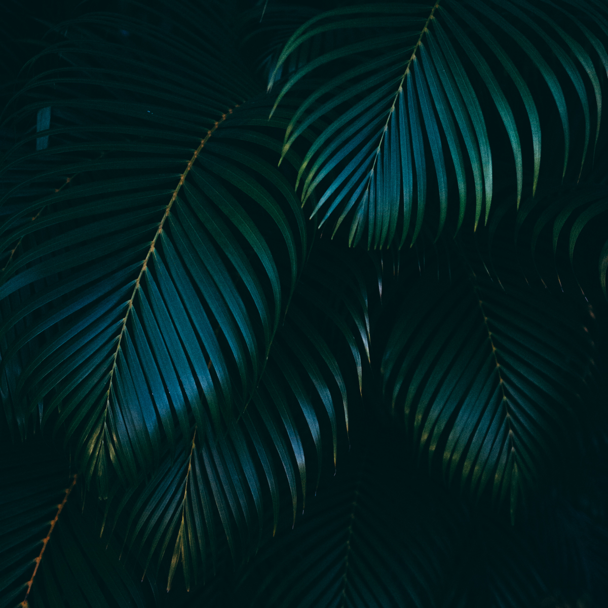 Fiji-blog-Lola-Photography-5960.jpg