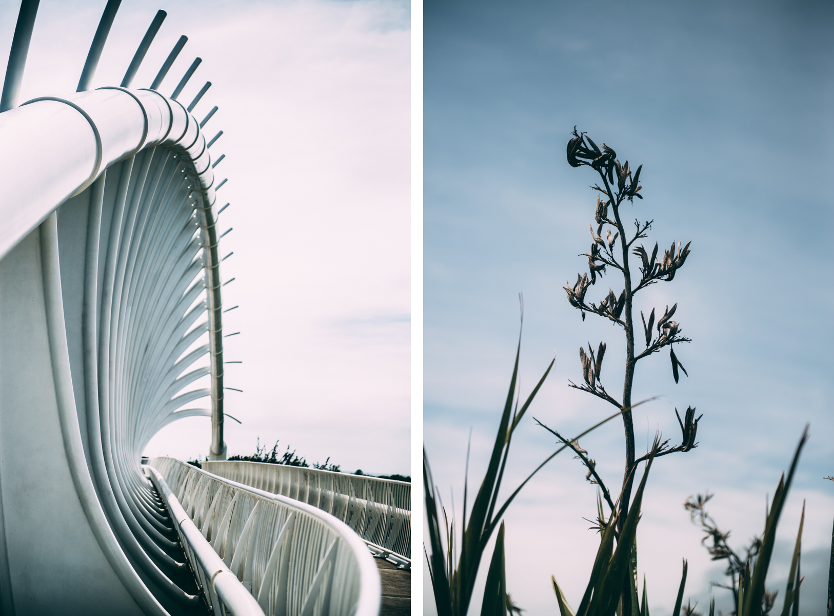 Venture-Taranaki-Lola-Photography13.jpg