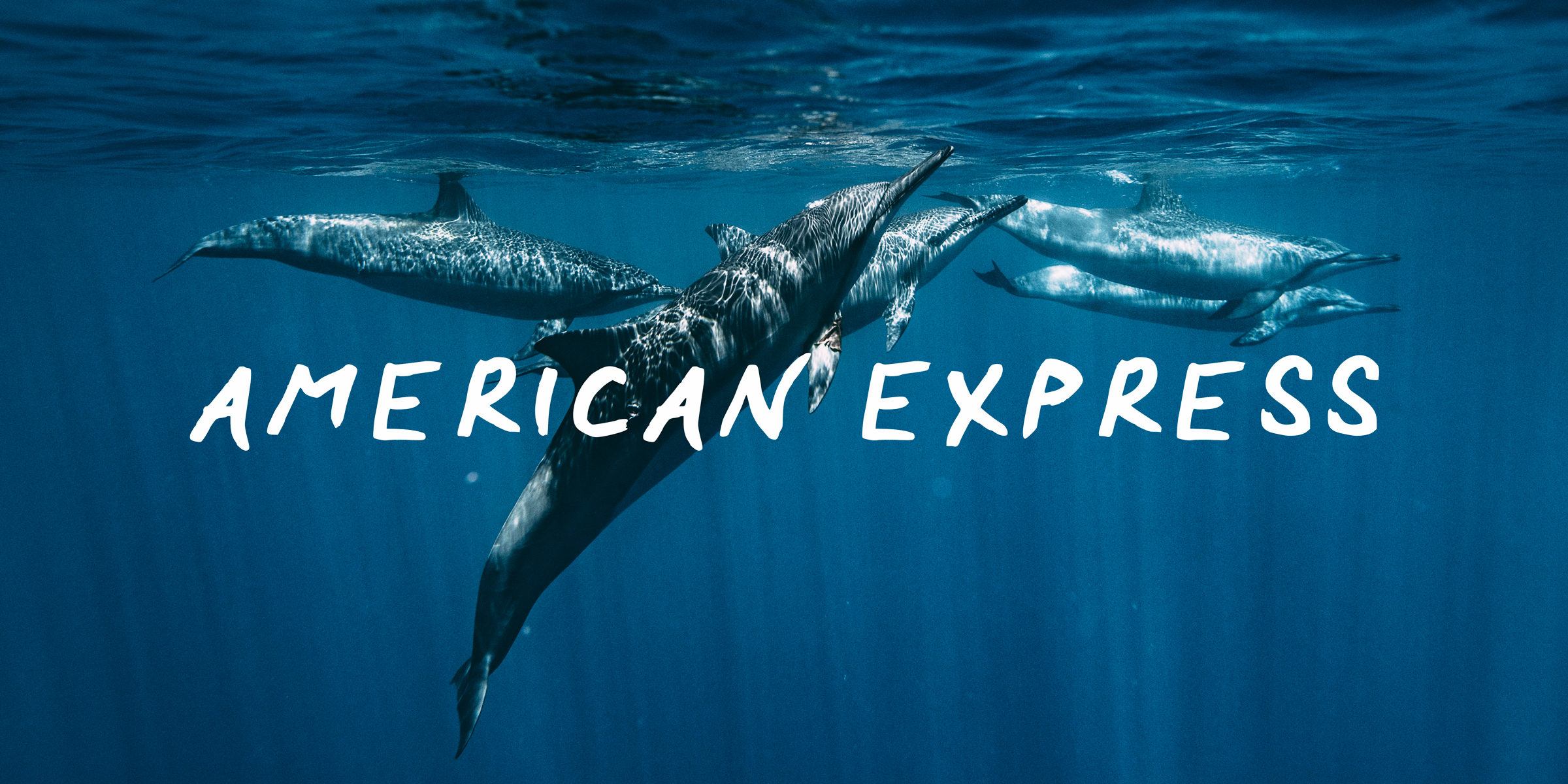 AMEX-Dolphins-Lola-Photography-2.jpg