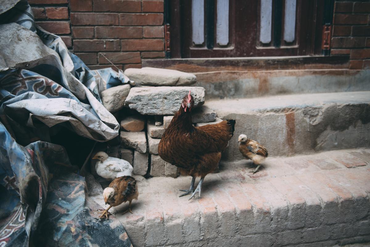 Nepal Blog Lola Photography_343.jpg