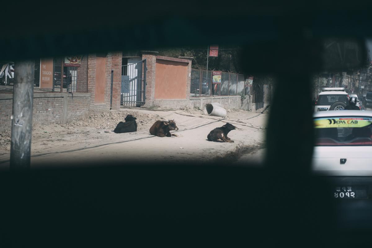 Nepal Blog Lola Photography_387.jpg
