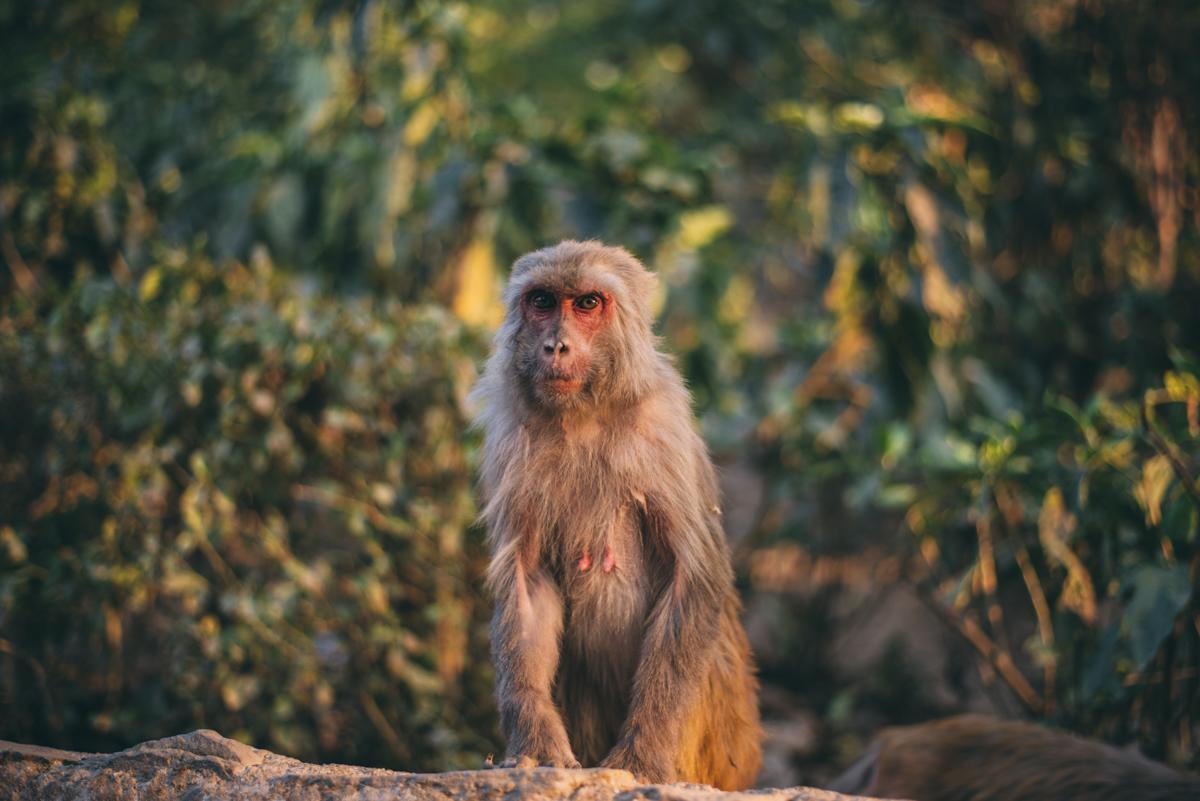 Nepal Blog Lola Photography_485.jpg