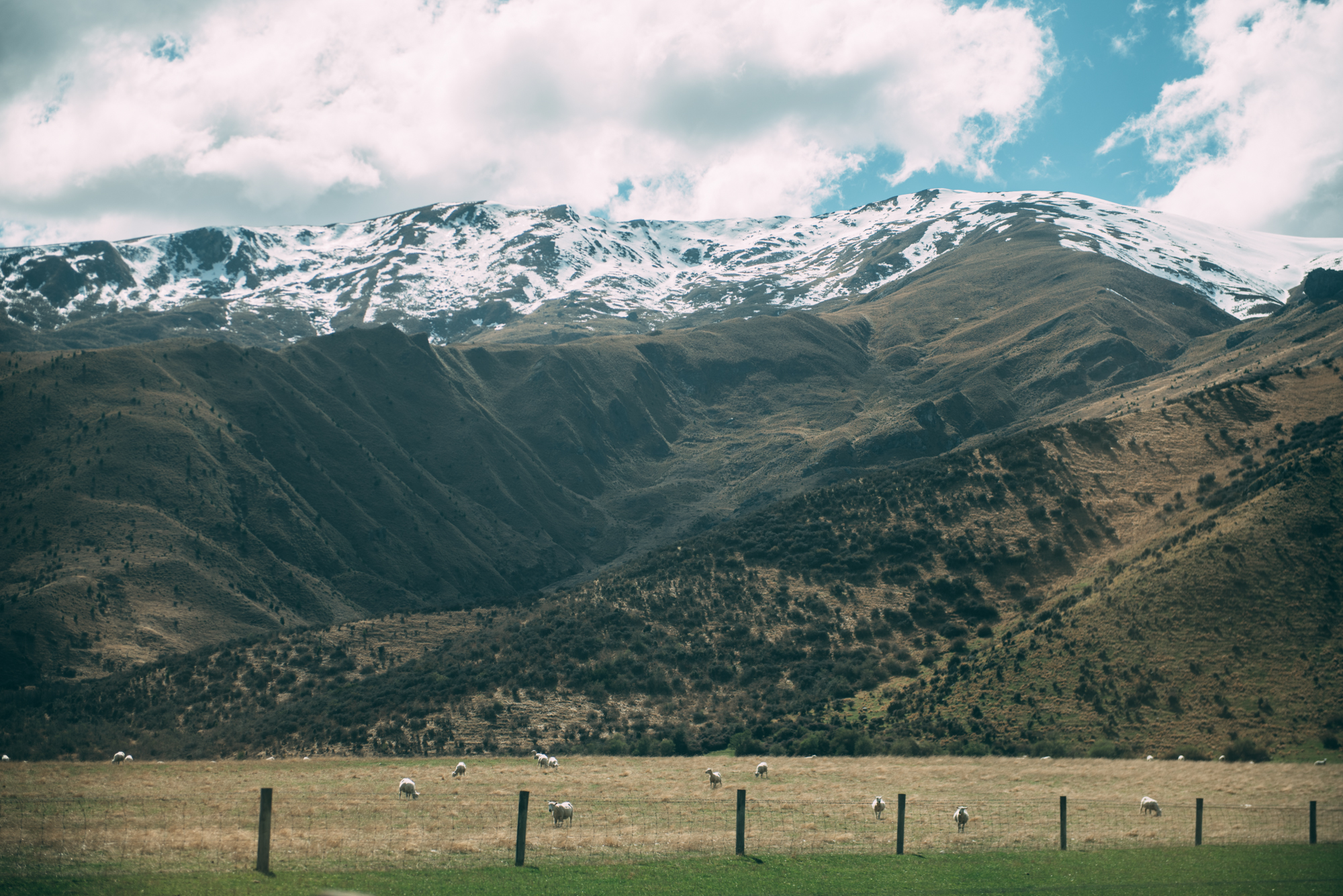 Queenstown Birthday Blog Lola Photography_157.jpg