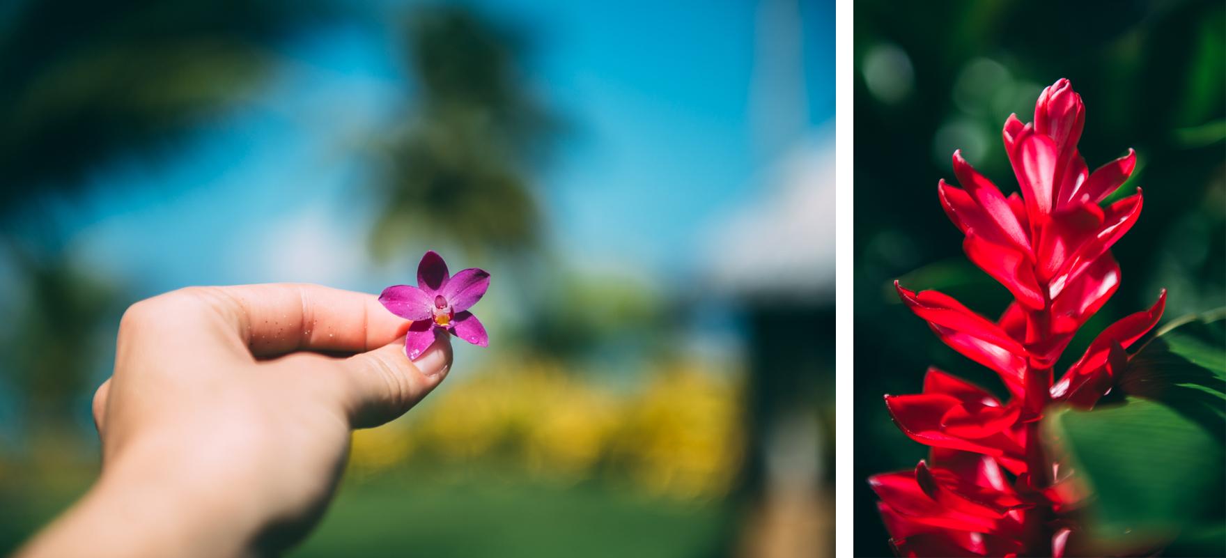 Samoa-Lola-Photography-3.jpg