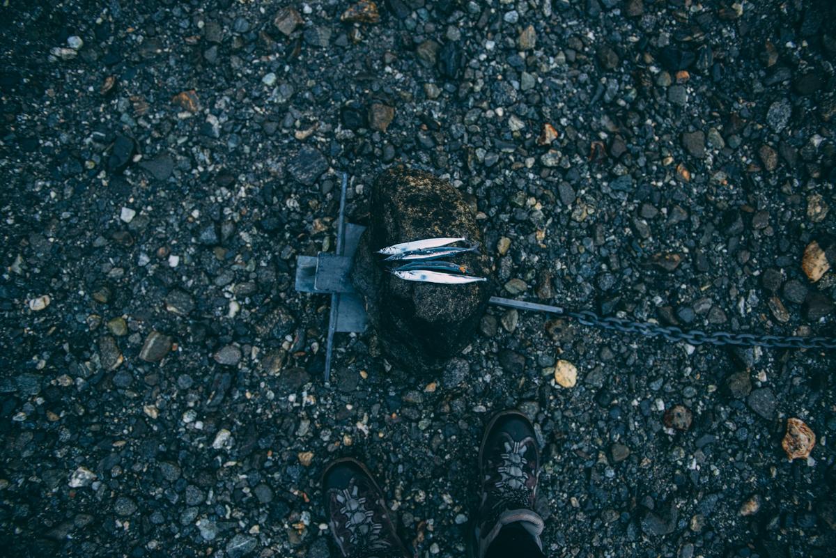 Milford Sound Blog Lola Photography_090.jpg