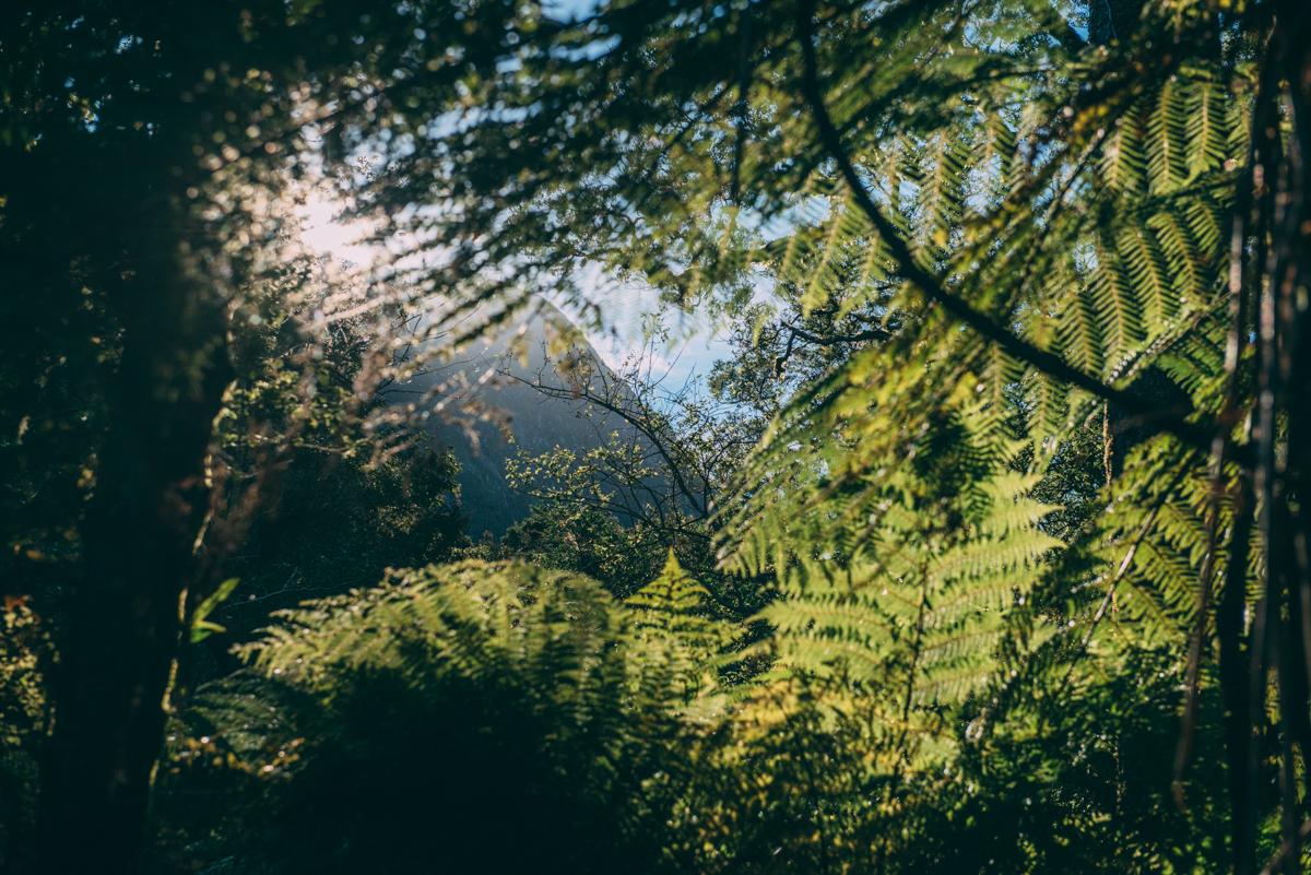 Milford Sound Blog Lola Photography_148.jpg