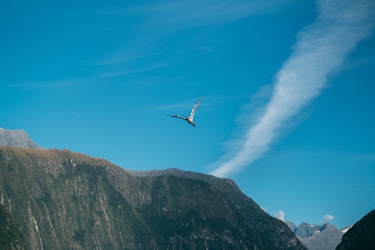 Milford Sound Blog Lola Photography_166.jpg