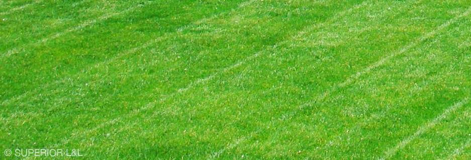 superior-ll-banner-grass-01.jpg