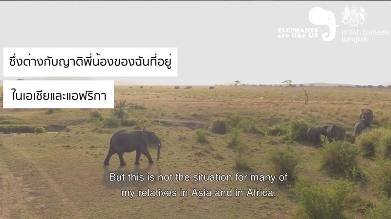 Midas-PR-Elephants-are-like-us.png