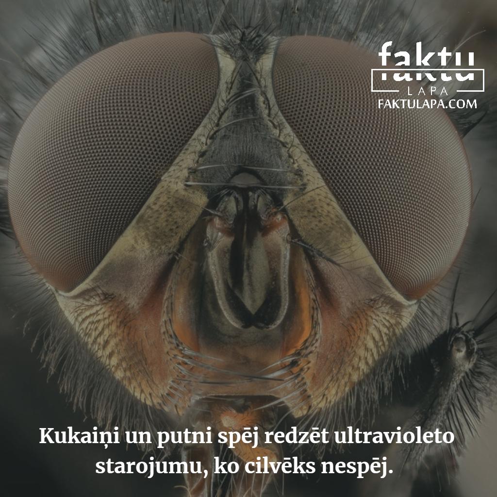 kukaiņu redze.png