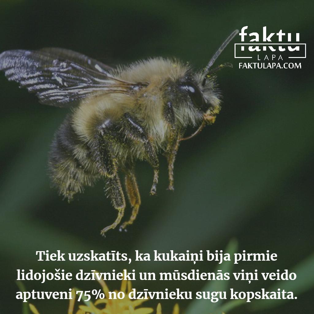kukaiņi.png