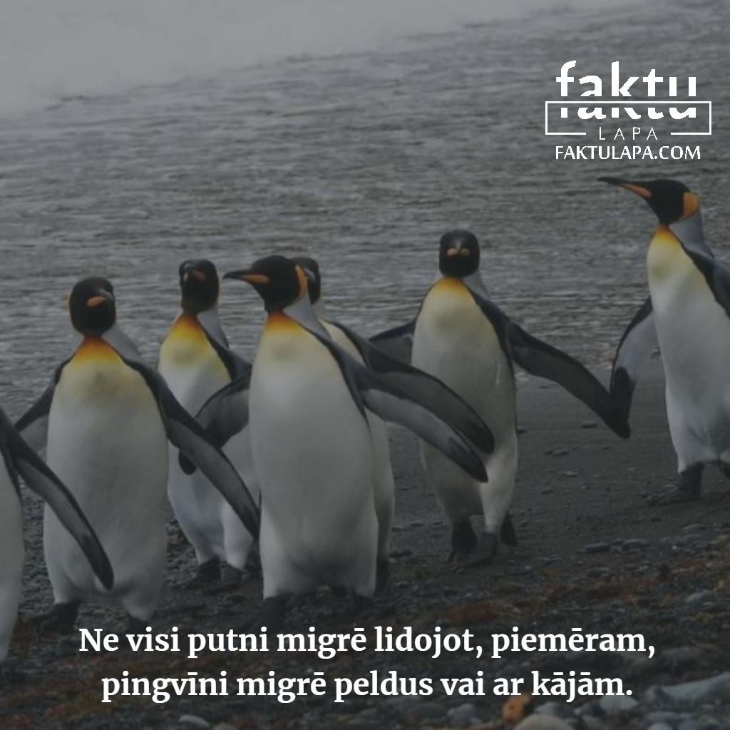 pingvīni.png
