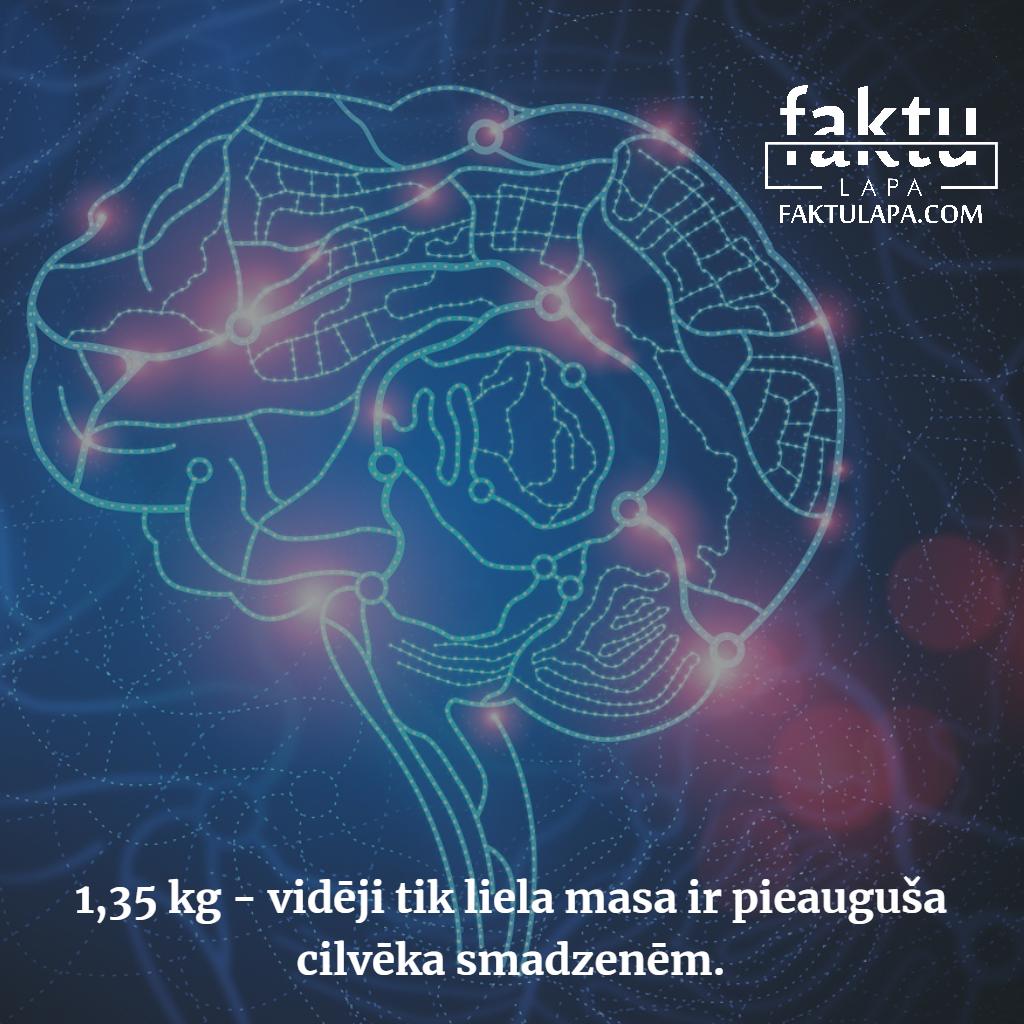 smadzeņu masa.png