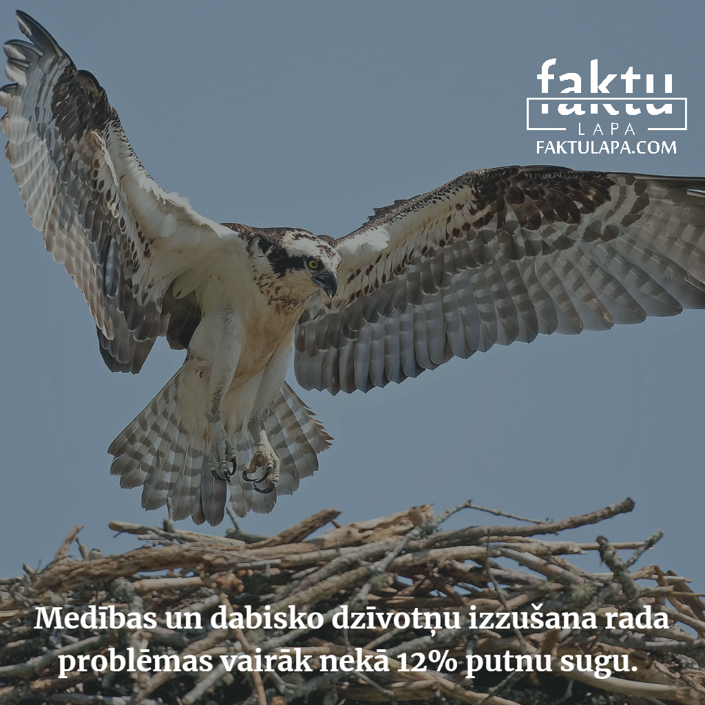 putnu sugas.png