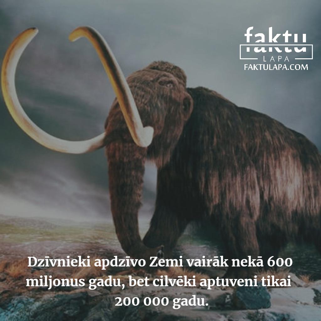 dzīvnieku vēsture.png