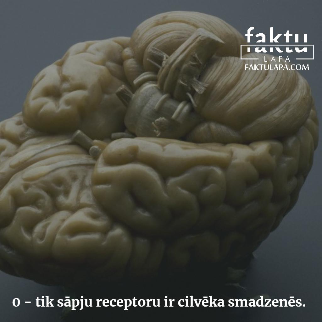 sāpju receptori smadzenēs.png