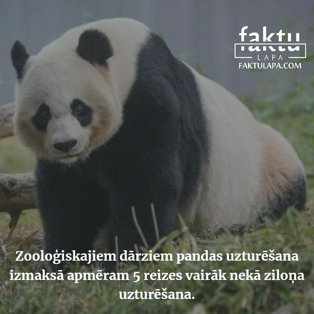 pandas zoo.png