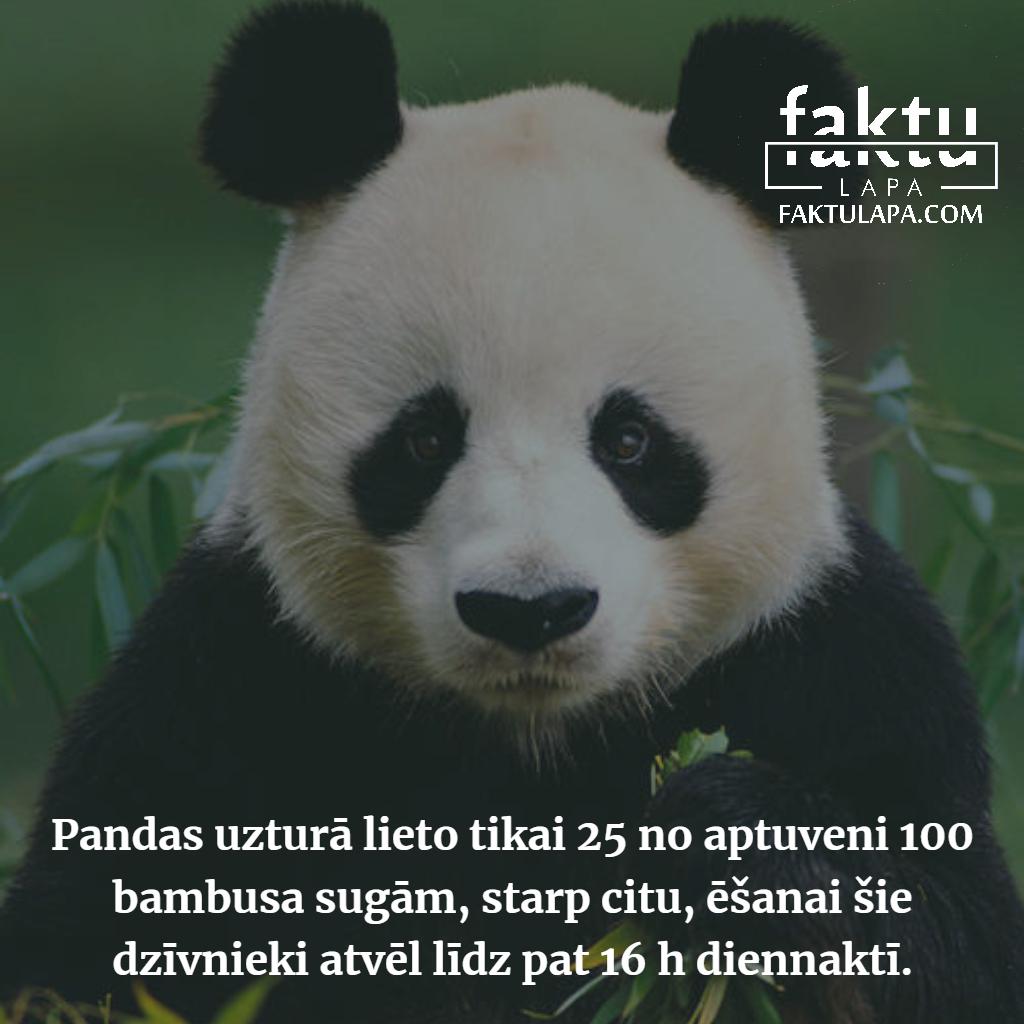 pandas uzturs.png