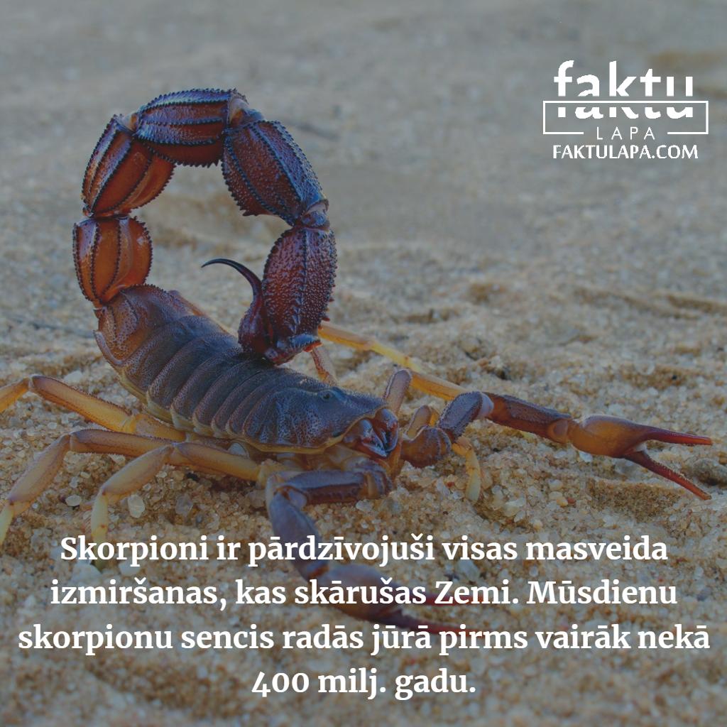 skorpioni.png