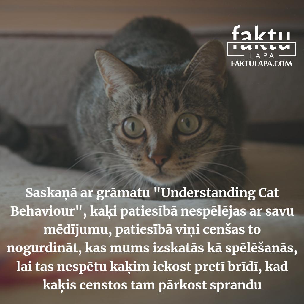 kaķi un medījums.png