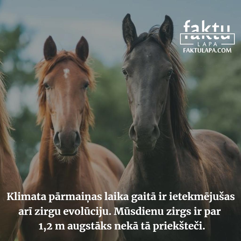 zirgi.png