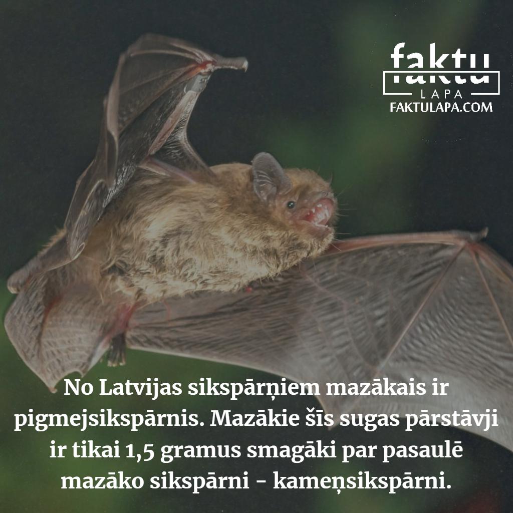 Latvijas mazākais sikspārnis.png