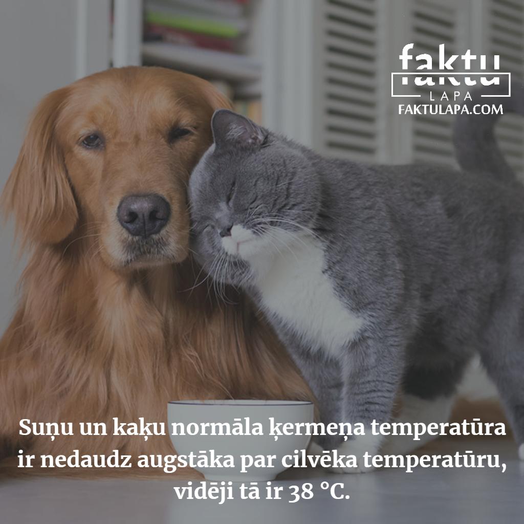 suņu un kaķu ķermeņa temperatūra.png