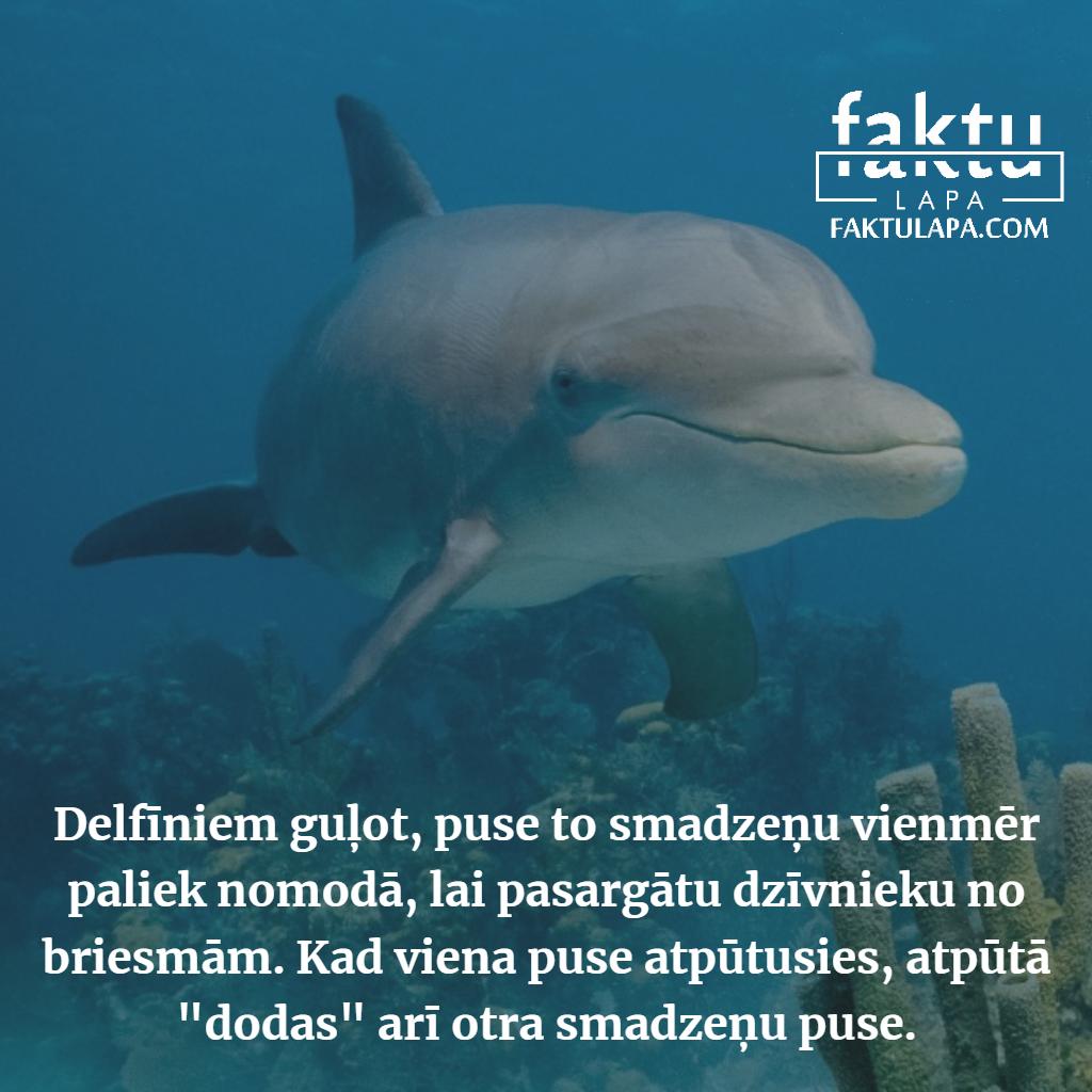 delfīni.png