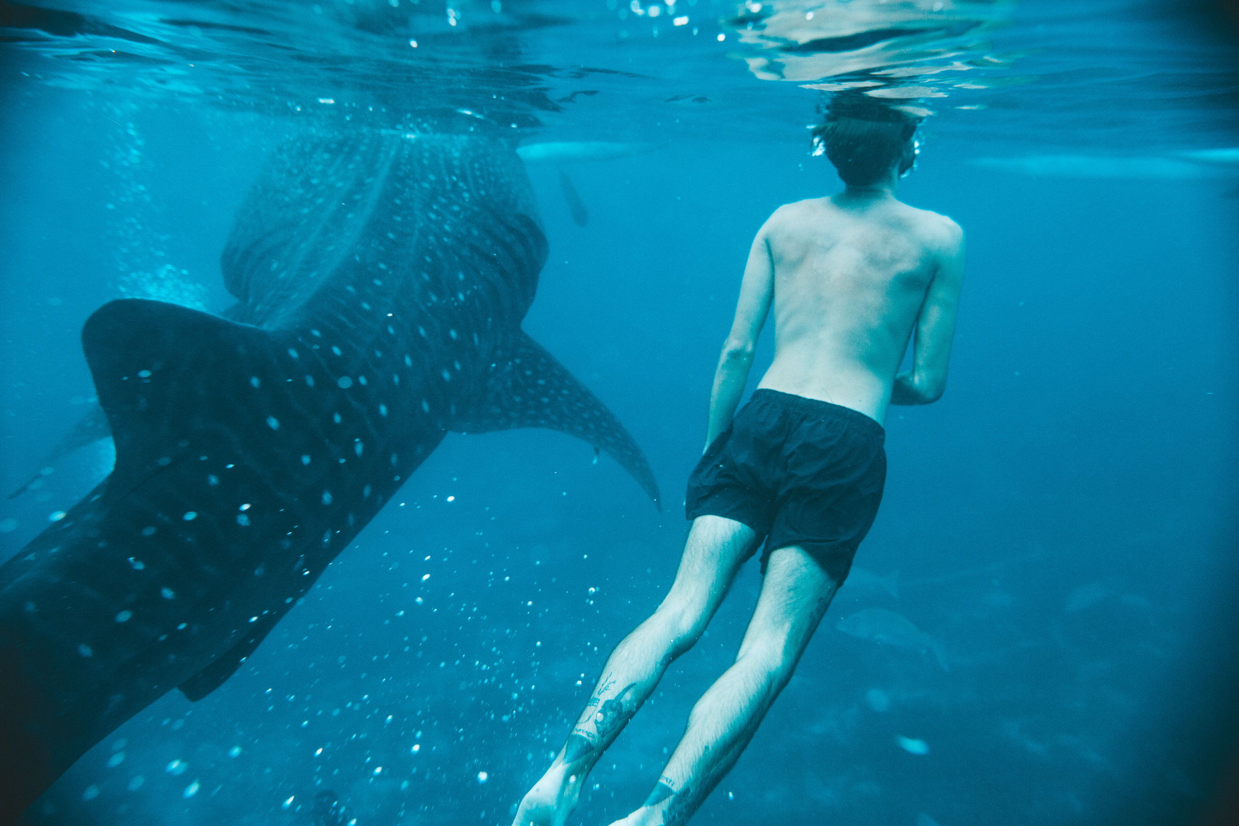 sharks (1 of 13).jpg