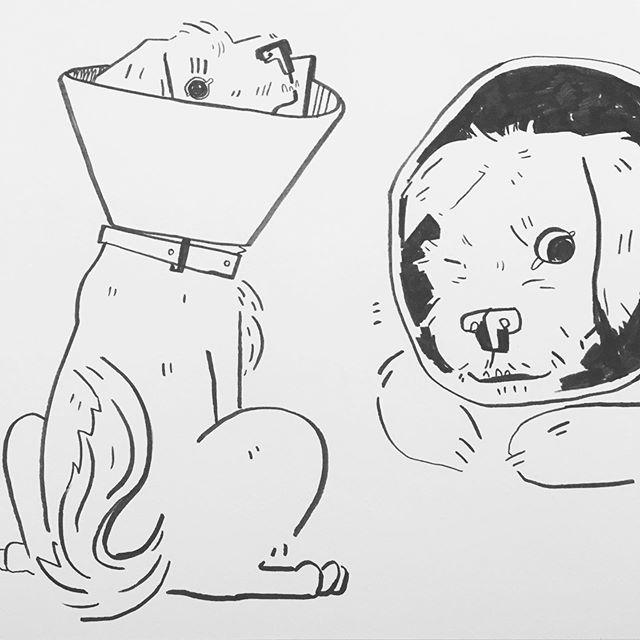 my dog's in a cooooneeee  #illustration #illustrator #art #brushpen #sketchbook #sketch #dogart