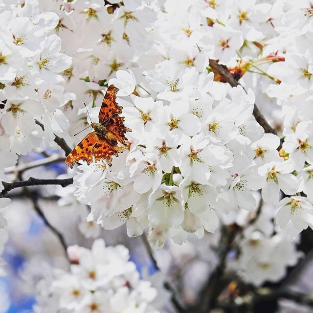 It's #WorldPoetryDay and as spring is finally here, we would like to celebrate with an excerpt from a poem by Eliza Cook:  Spring ⁣ Welcome, all hail to thee!⁣ Welcome, young Spring!⁣ Thy sun-ray is bright⁣  On the butterfly's wing.⁣ Beauty shines forth⁣  In the blossom-robed trees;⁣ Perfume floats by⁣  On the soft southern breeze.⁣