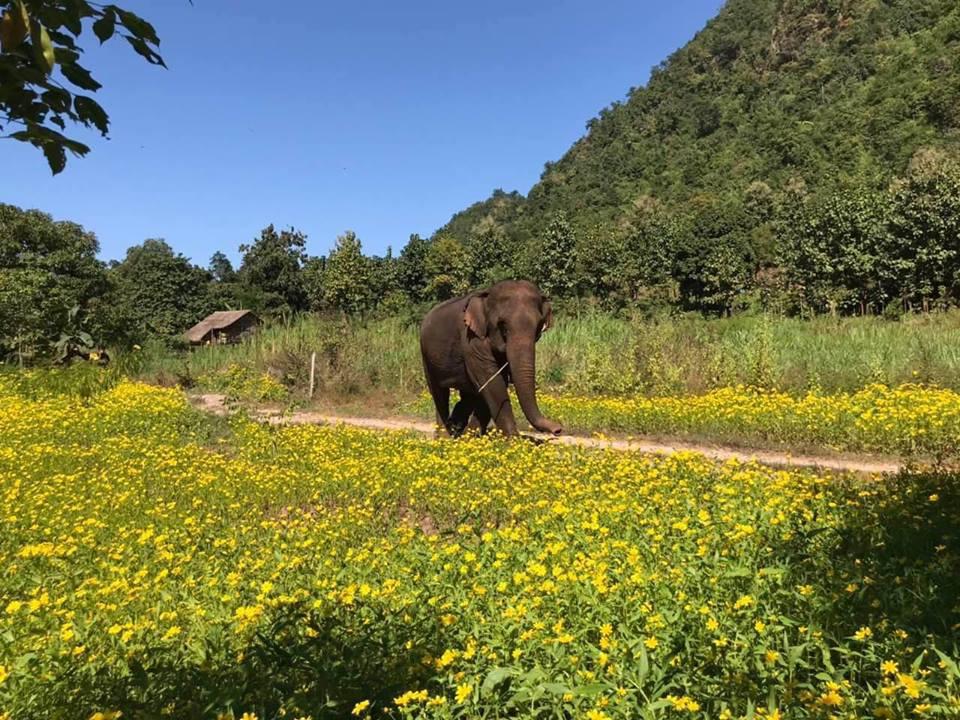 myanmar-birmania-green-valley-elephant-camp.jpg