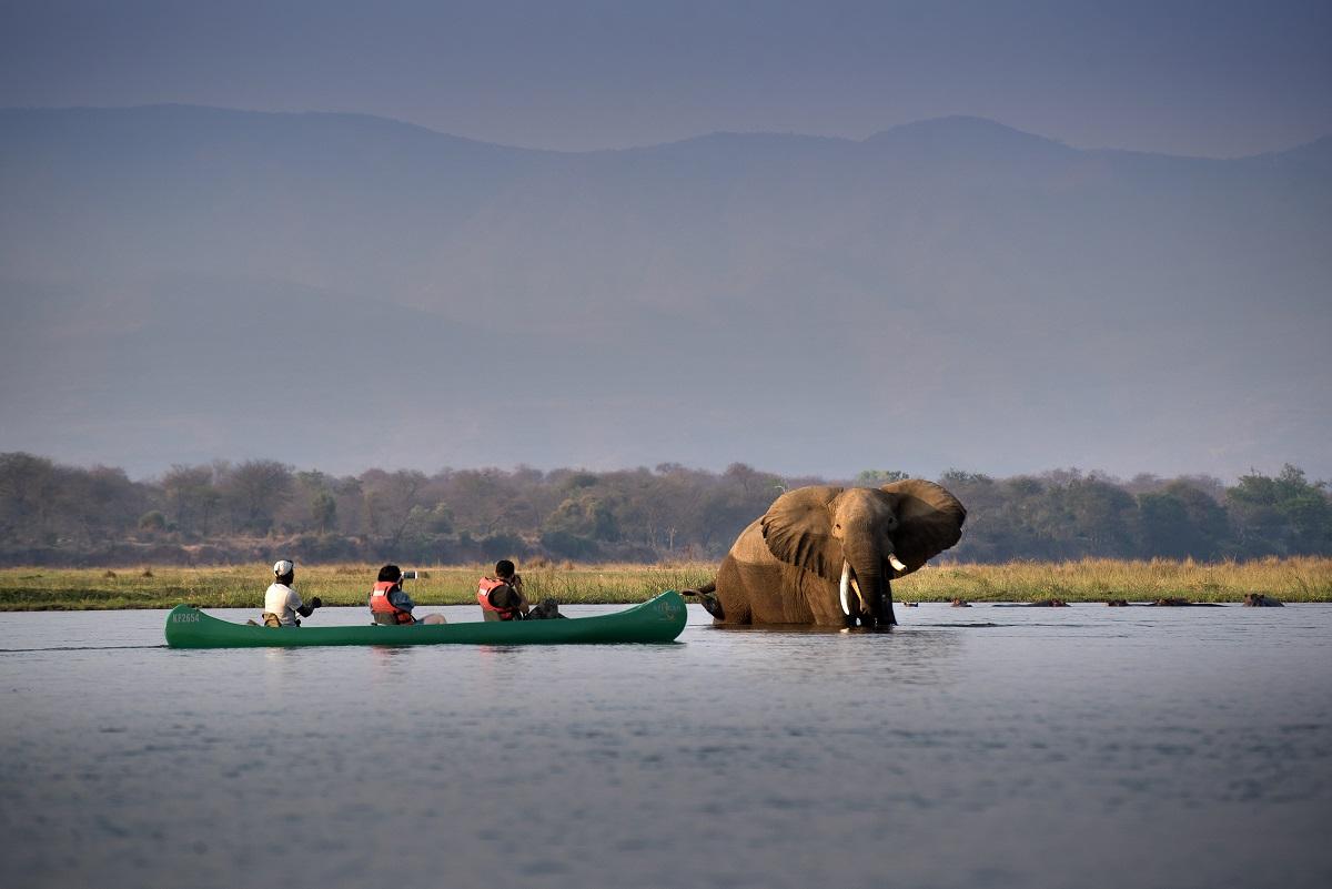 zimbabwe_avventura_canoa_elefante.jpg