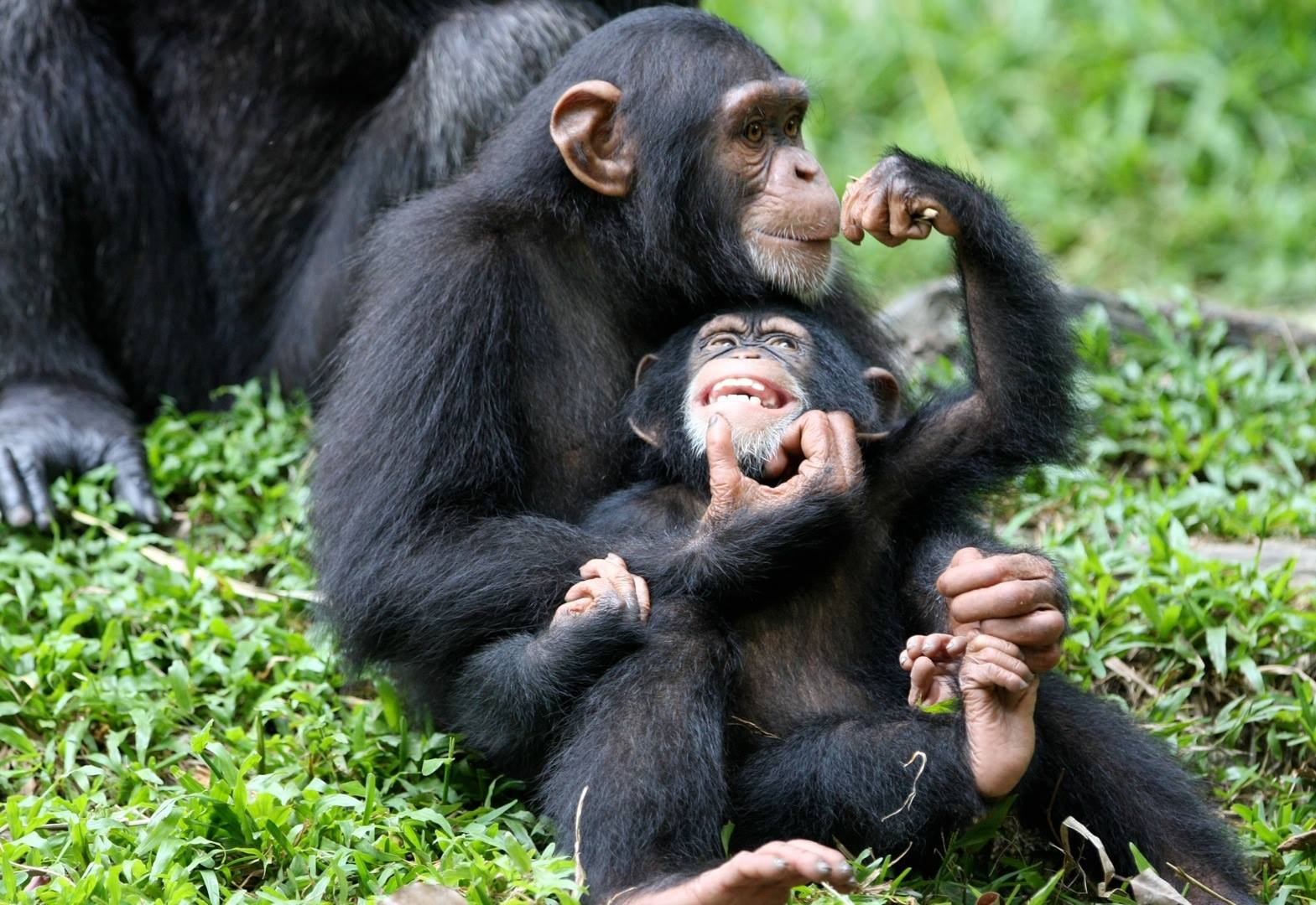 uganda-scimpanzee-trekking.jpg