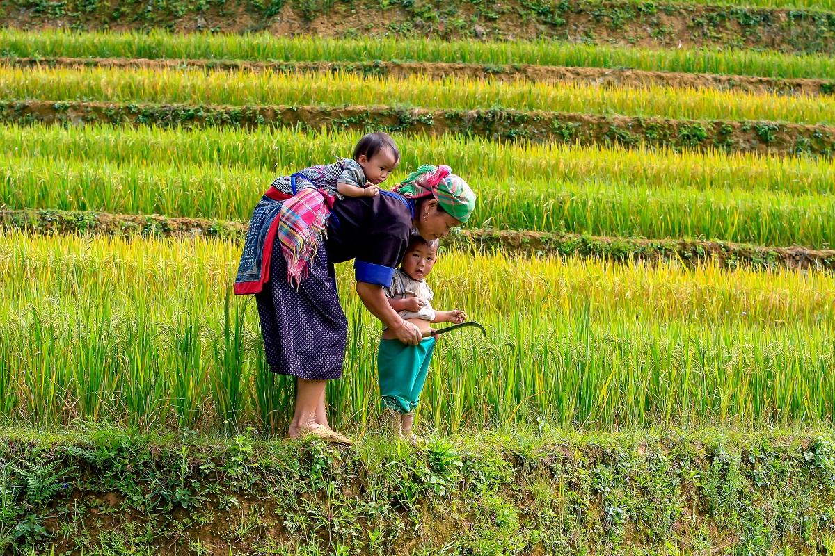 vietnam-risaia-donna-bimbo.jpg