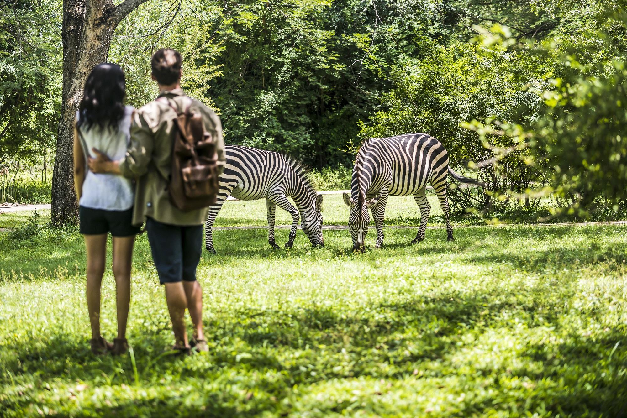 Zimbabwe-coppia-zebre.jpg