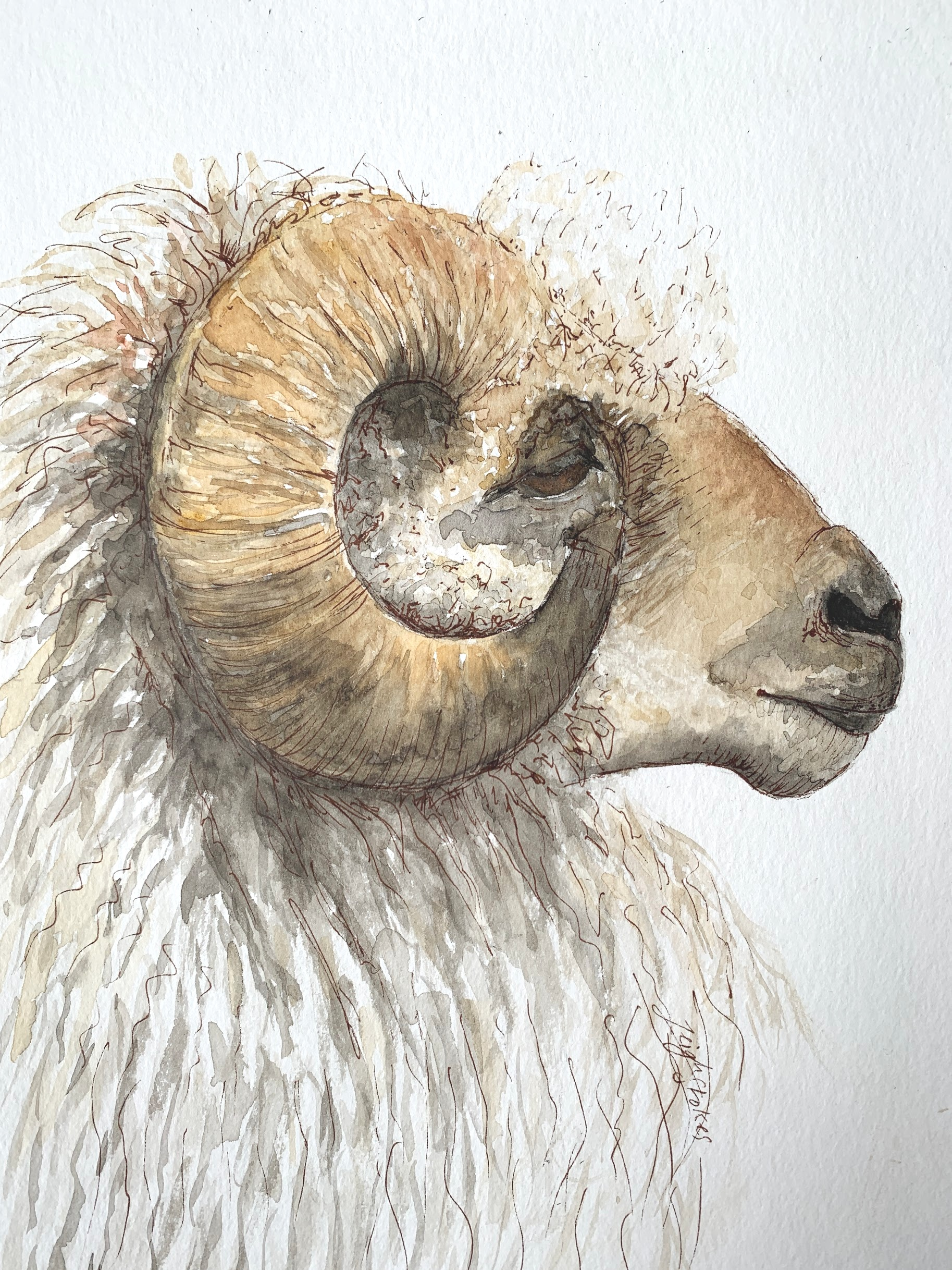 A4 portrait of ram R700 (sold)