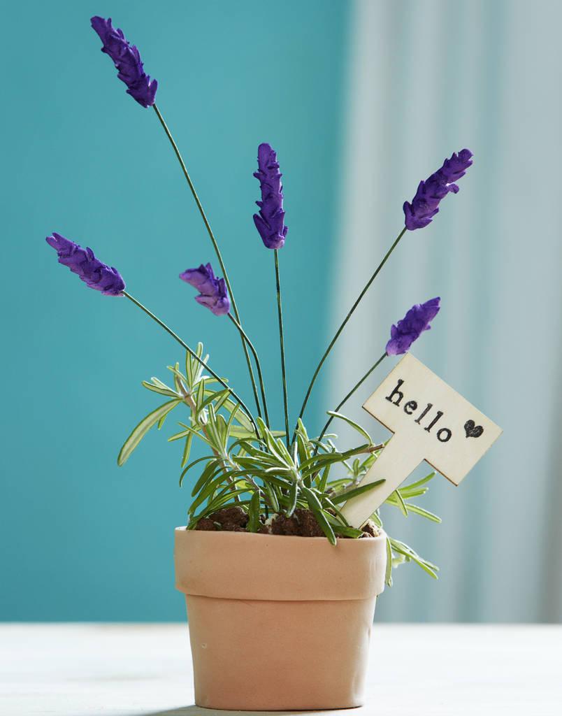 original_edible-lavender-flourpot-cake.jpg