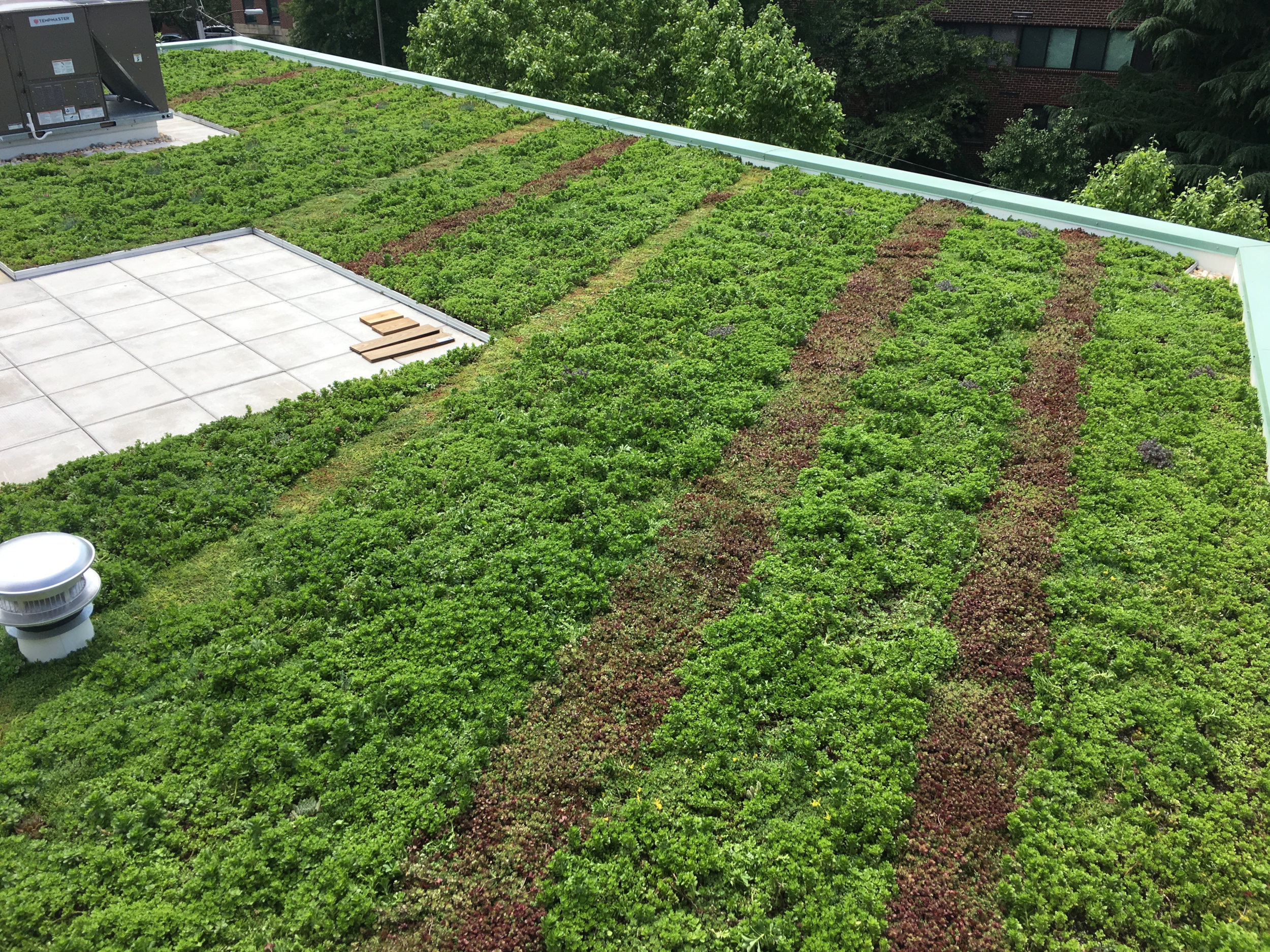 Alexandria-VA-Green-Roof-Sedum-Stripes.jpg