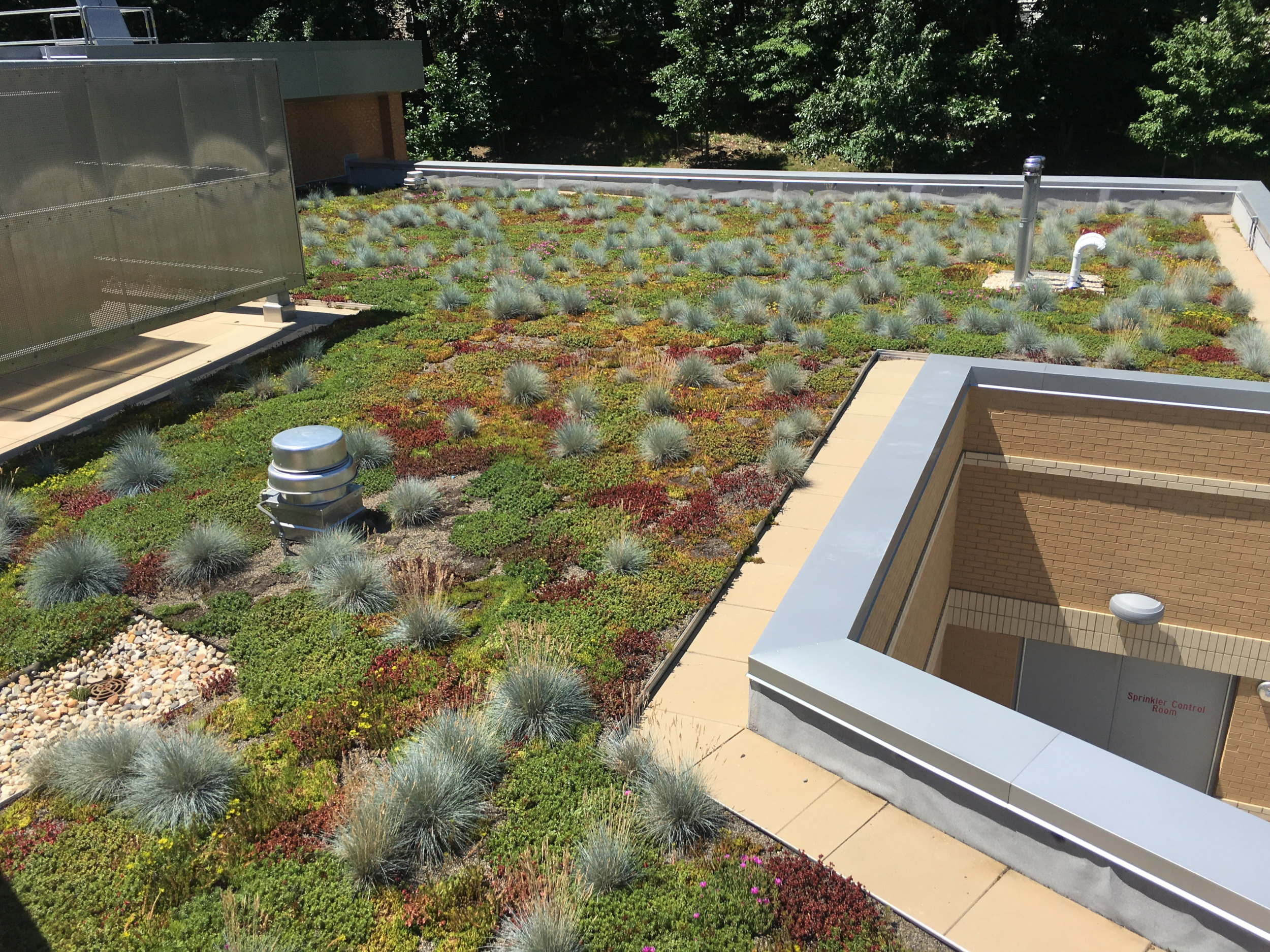 Germantown-MD-Green-Roof-Grasses-Interplanted.jpg