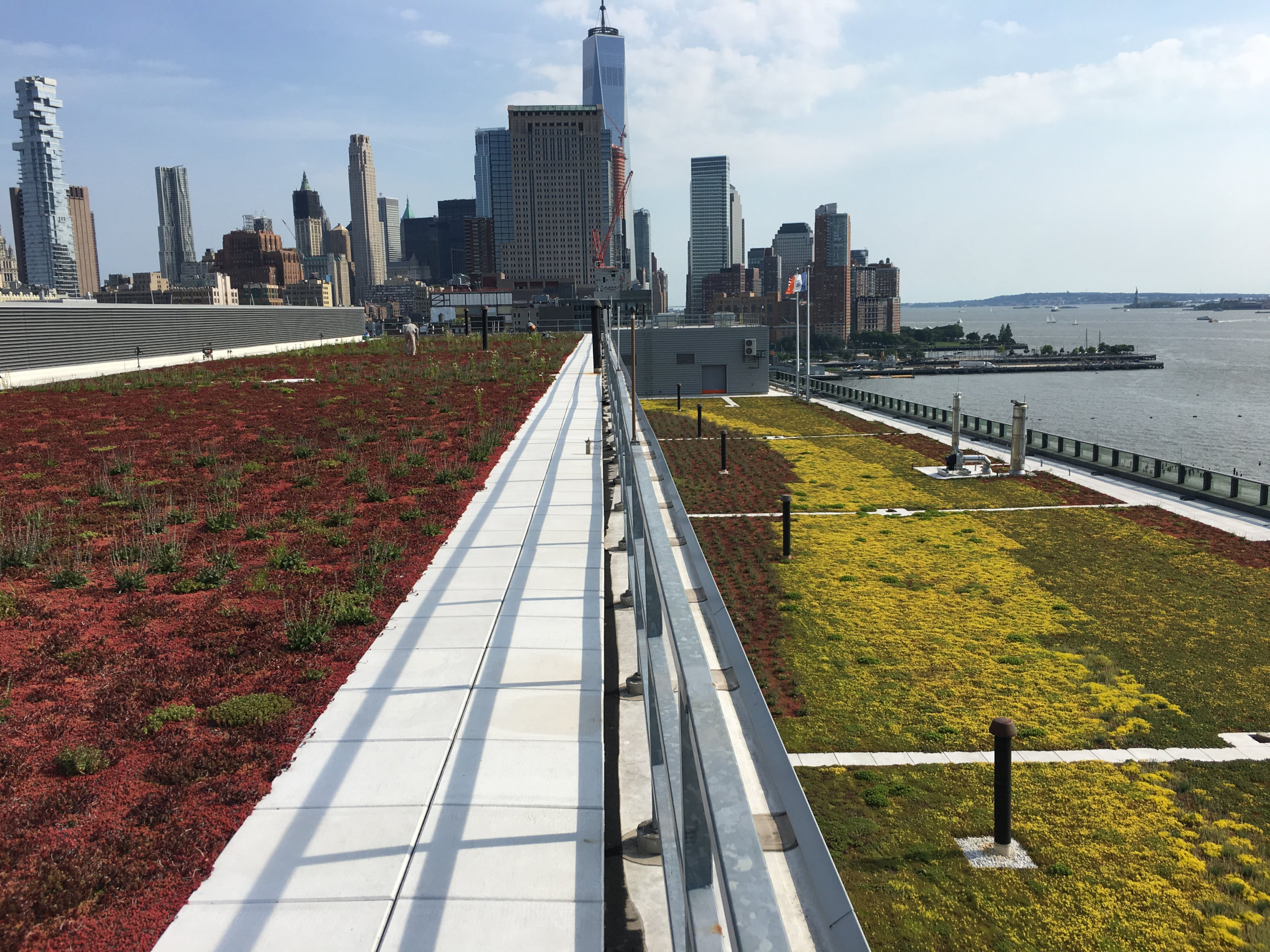 New-York-NY-Green-Roof-Diverse-Sedum-Species.jpg