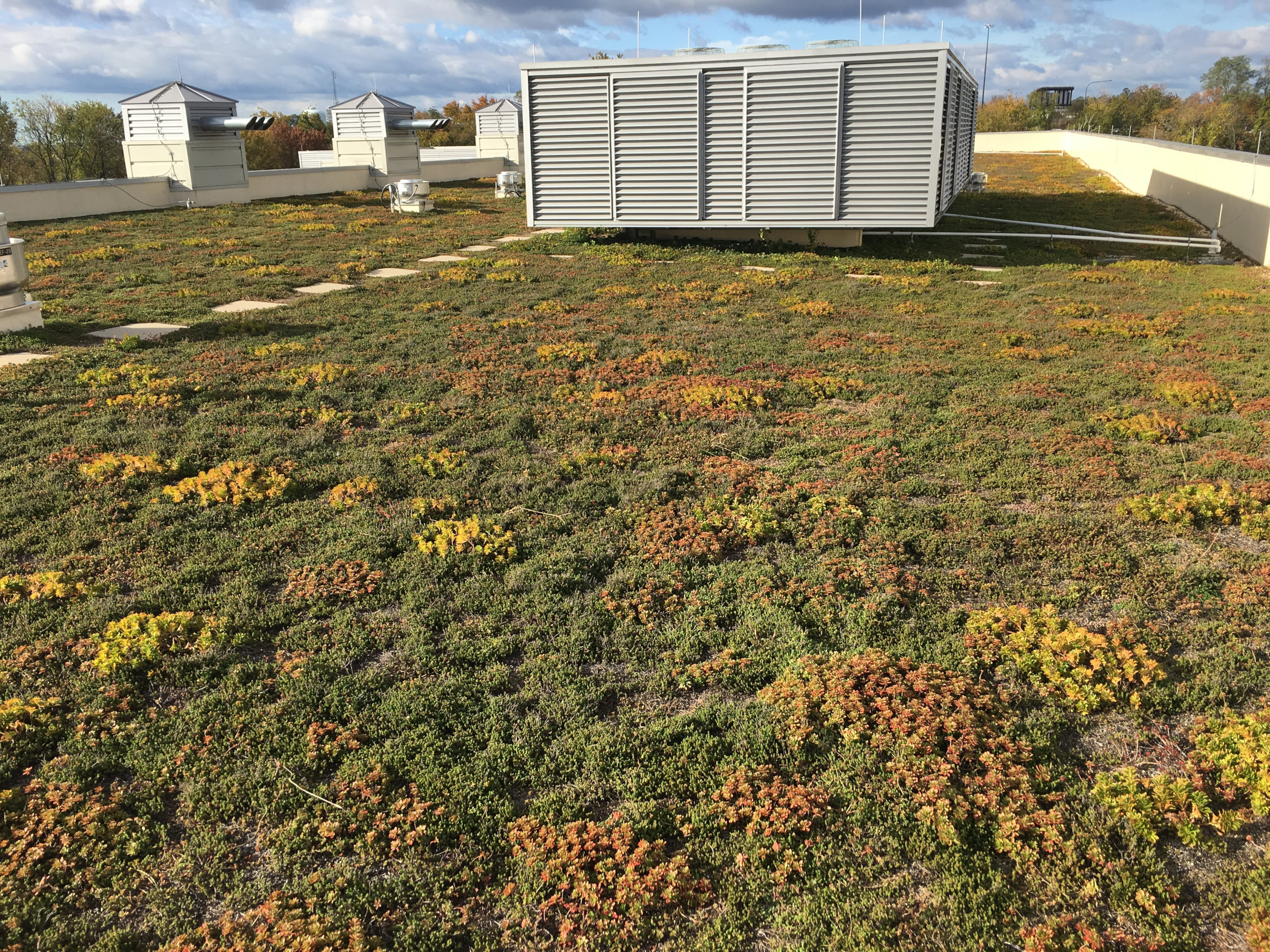 Rockville-MD-Green-Roof-Autumn.jpg