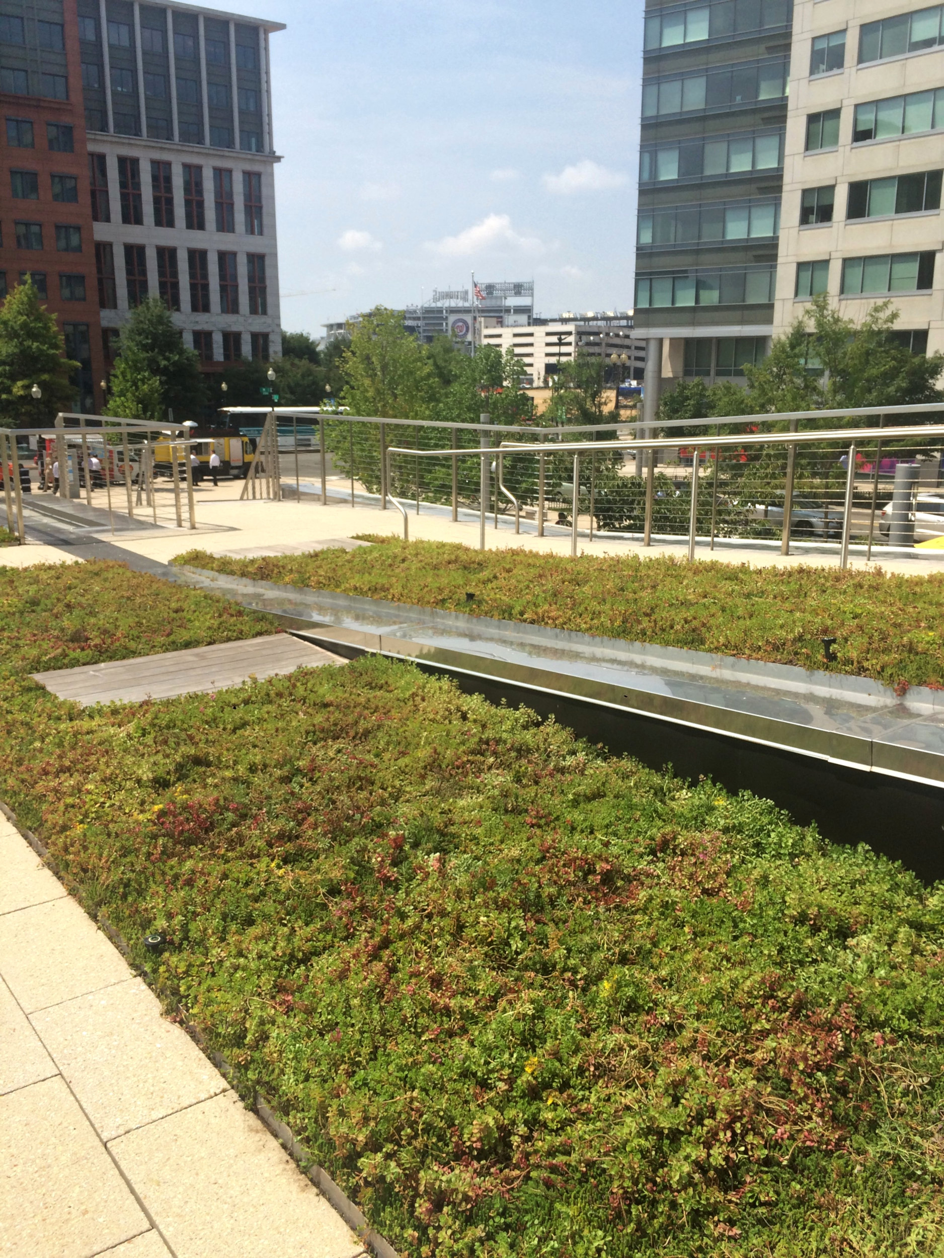 Washington-DC-Green-Roof-Slope.jpg