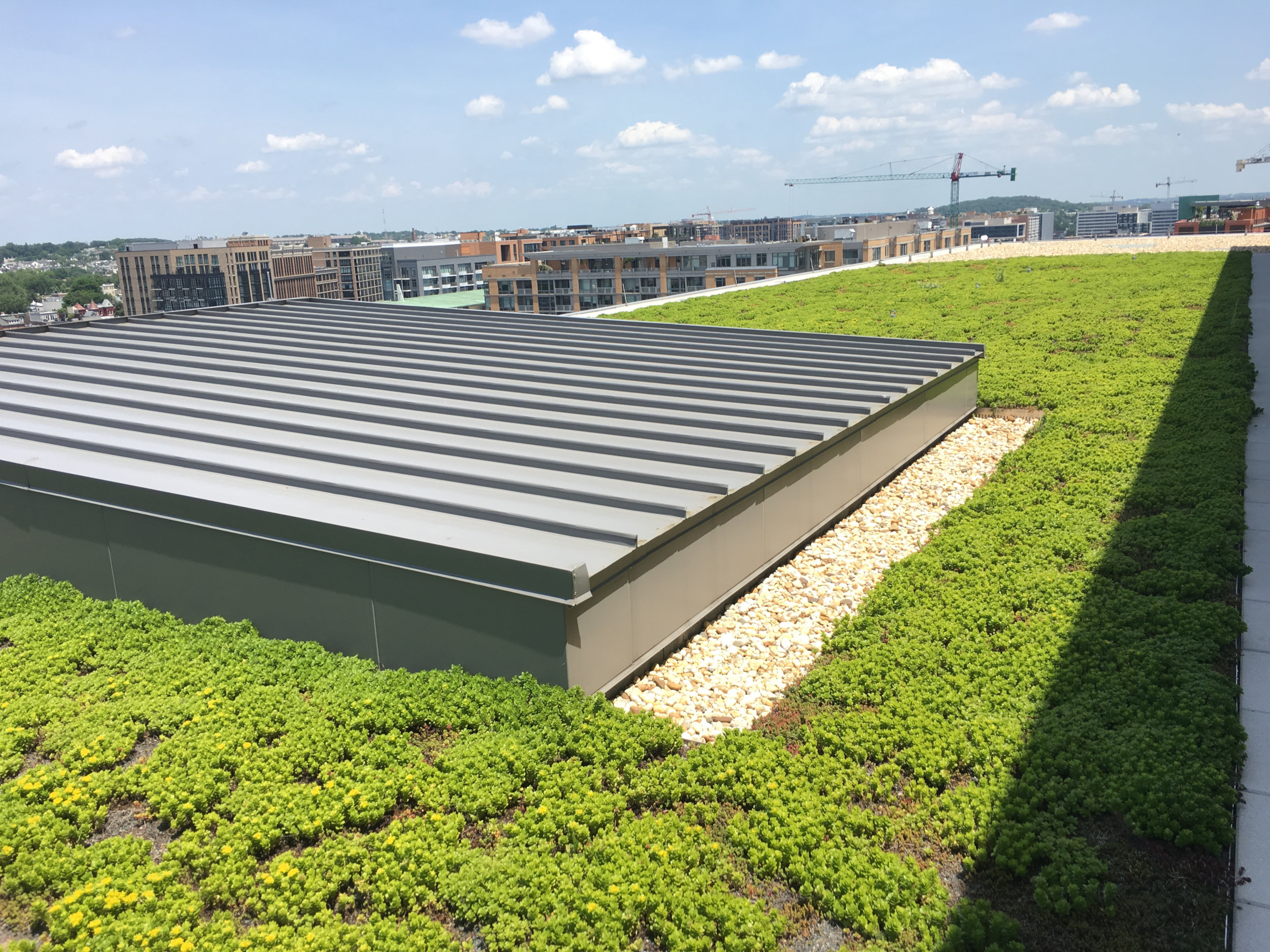 Washington-DC-Green-Roof-2.jpg