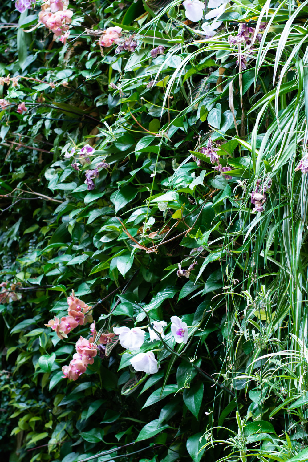 outdoor-living-wall-with-flowers-web.jpg