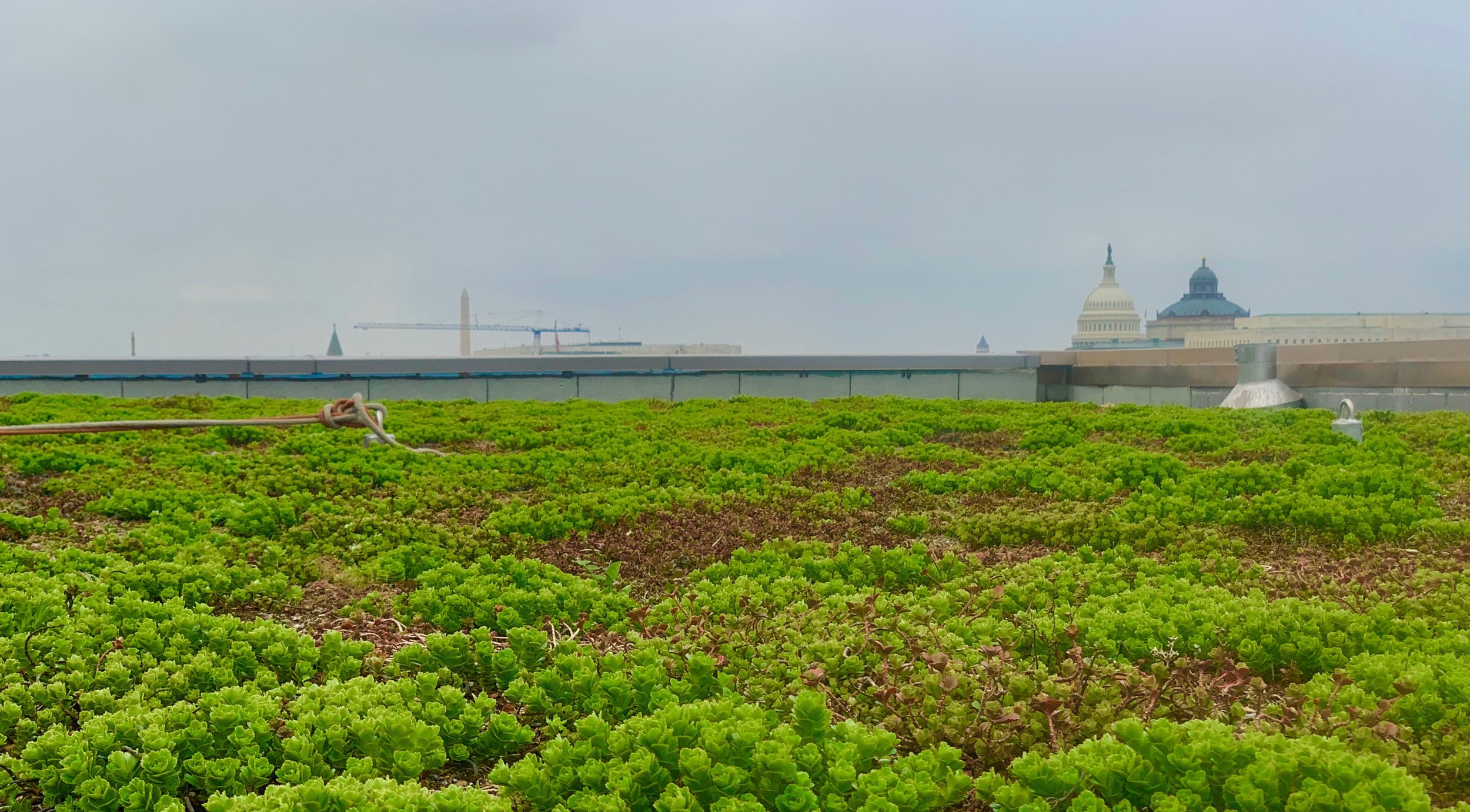 Green-Roof-Washington-DC.jpg